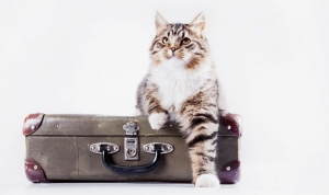 Quick Travel Tips - Cats