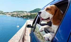 It is now easier than ever for your pet to travel between countries